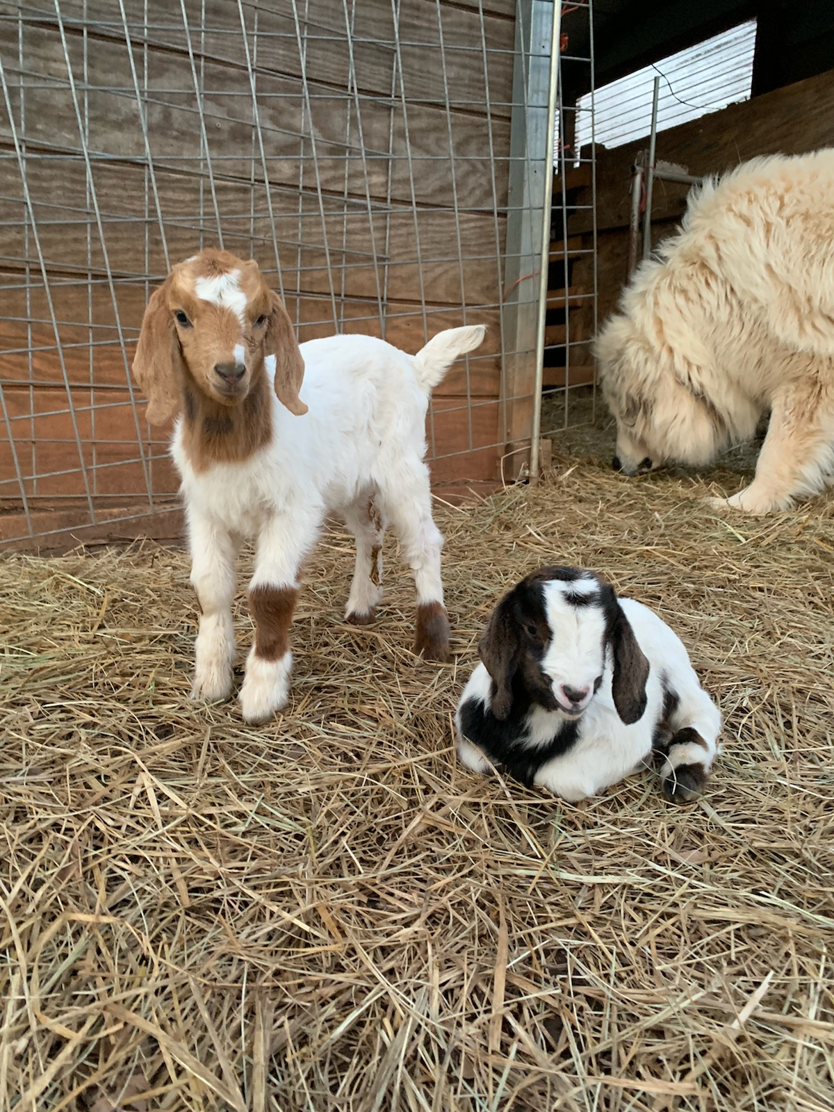 Copper's Babies - Submitted by Julie Macialek, Office of Research, Innovation and Economic Development