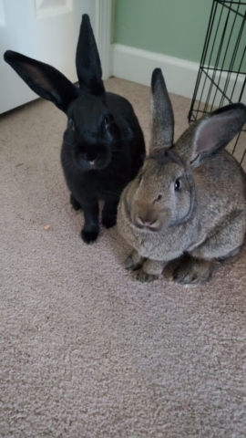 Ebony and Pearl - Submitted by Patty Fields, College of Education